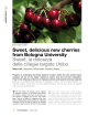 Sweet, delicious new cherries from Bologna University Sweet, la - Documents