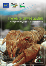 The white-clawed crayfish