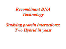yeast two-hybrid assay