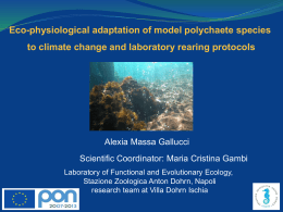 Eco-physiological adaptation of model polychaete