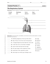 The Respiratory System Content Practice  A LESSON 1