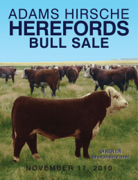 HEREFORDS ADAMS HIRSCHE BULL SALE